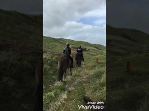 Horseback riding in Denmark