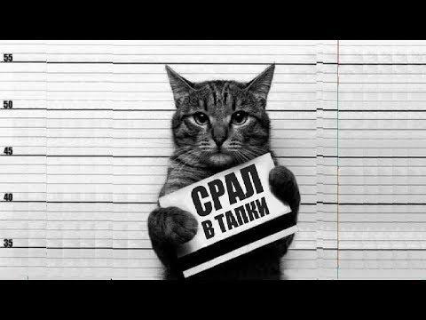 СМЕШНЫЕ КОТЫ И КОШКИ 2018 Приколы с котами и кошками 2018