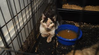 200+ animals rescued from alleged neglect situation
