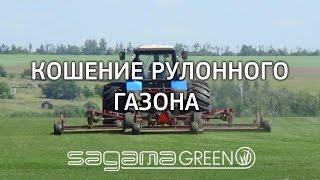 Рулонный газон в Самаре. Процесс кошения газона. Sagama Green(Одно из важных мероприятий в процессе выращивания и по уходу за газоном является скашивание. Квалифицирова..., 2016-07-27T07:27:43.000Z)