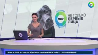 Московское метро наводнили черные лабрадоры «Мира» - МИР24