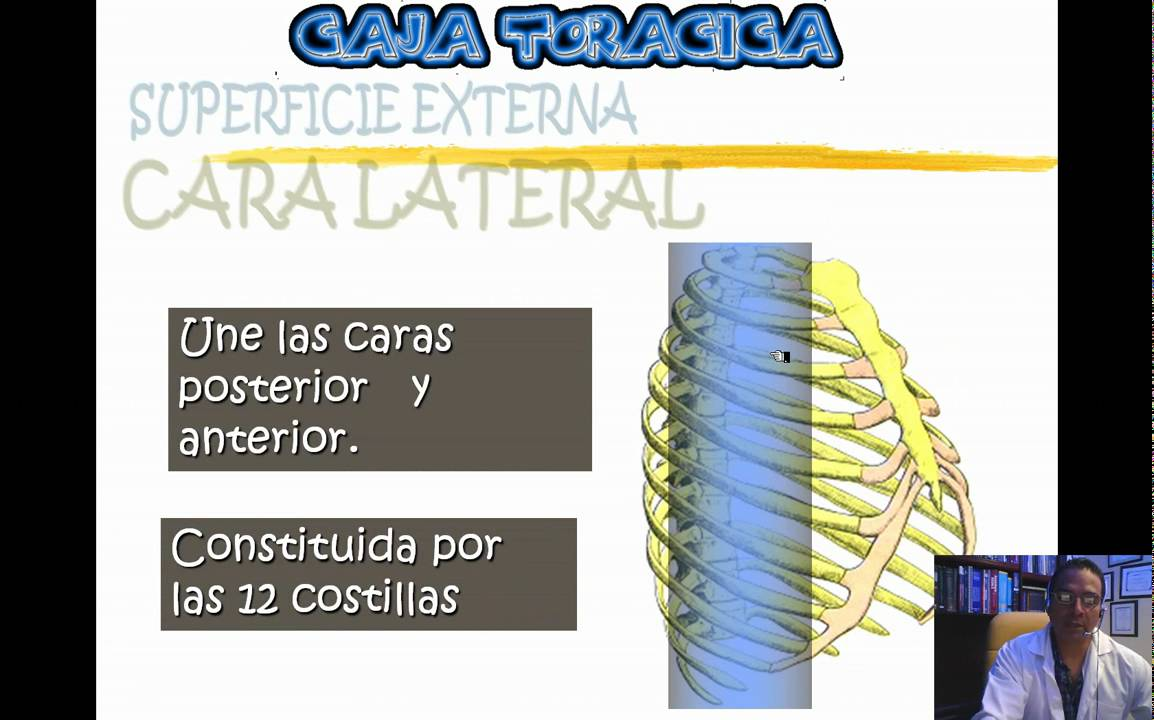 ANATOMIA DEL TORAX 2010 PARTE 1 .wmv - YouTube