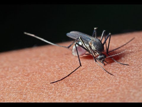 How To Treat Mosquito Bites Remedies For Mosquito Bites Youtube