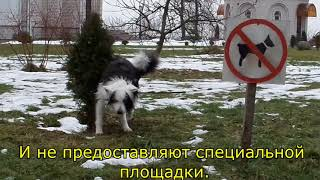 Площадки для выгула собак в Могилеве нет