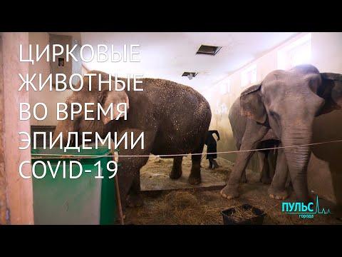 Животные в цирке во время эпидемии COVID-19