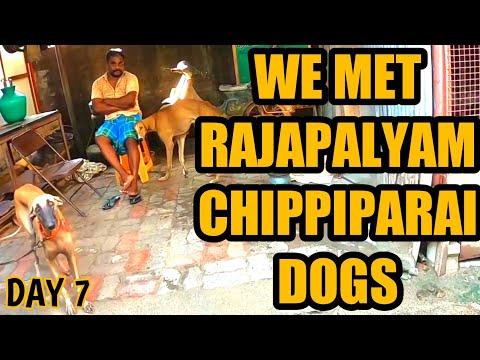 Rajapalyam And Chippiparai | K2K On Bicycle With Dog | Dogs Joy | thumbnail