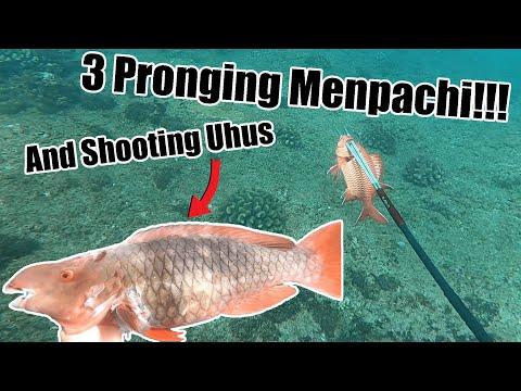 Spearfishing Hawaii (3 Pronging Menpachi & Kole) Along with shooting Uhu's