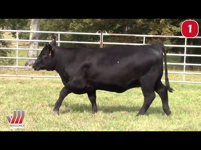 Waggoner Cattle Co. Lot 1