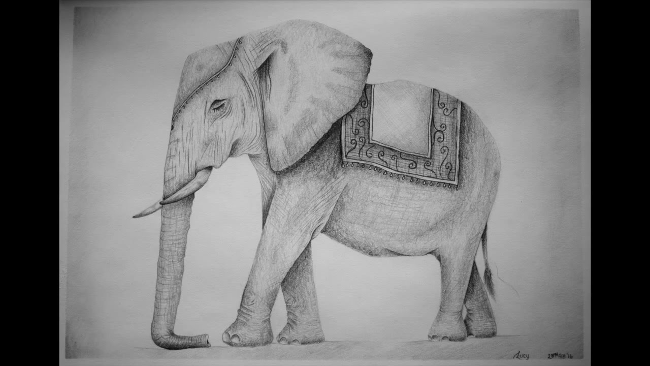 Pencil drawing indian elephant