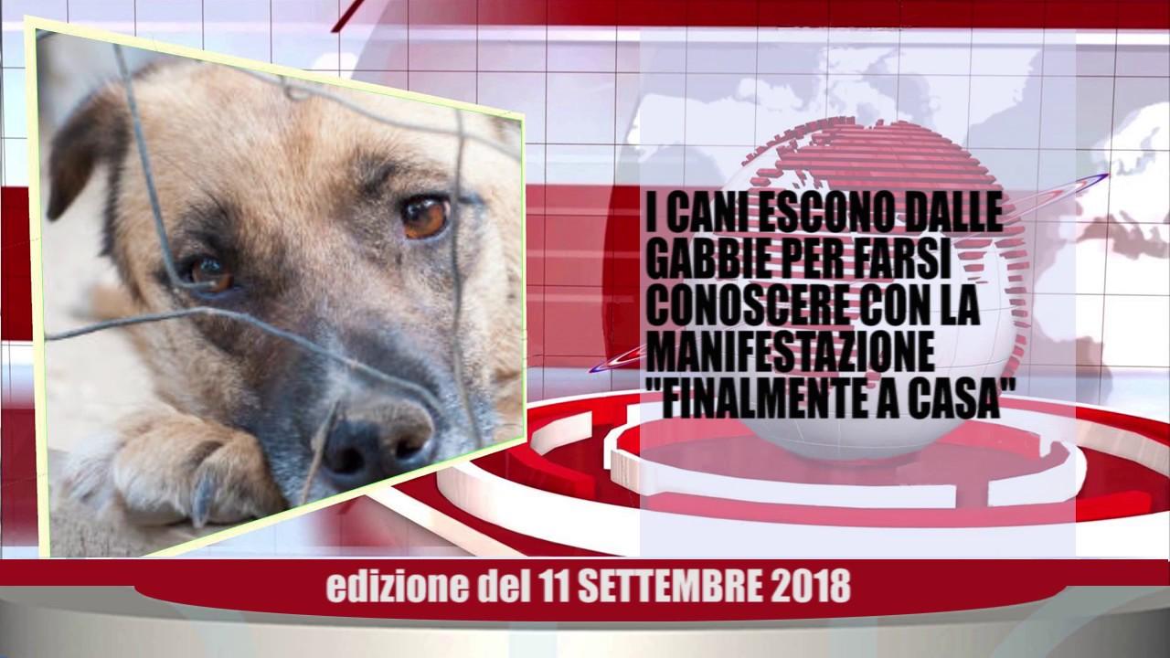 Velluto Notizie Web Tv Senigallia Ed  11 09 2018