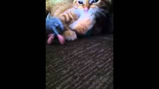 Retarded mouse vs mean cat