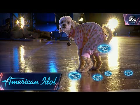 American Idol Audition Goes To The Dogs - American Idol On ABC