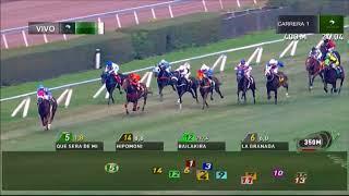 Vidéo de la course PMU PREMIO VAMOS NENA