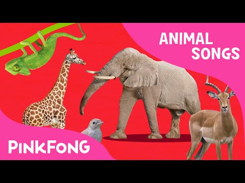 ABC Animal Train | Animal Songs | PINKFONG Songs For Children