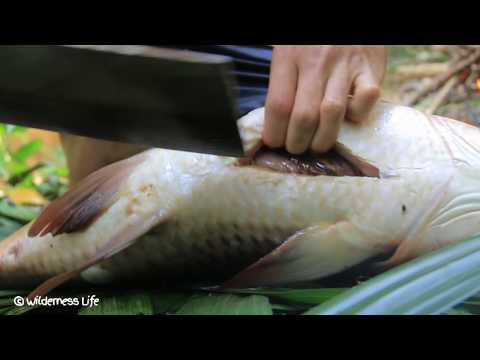 Cooking Biggest Fish near River for Dinner Eating Delicious