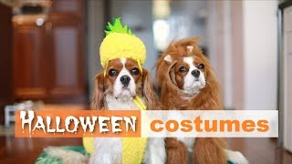 HALLOWEEN COSTUMES FOR DOGS | Funny dogs in Halloween costumes
