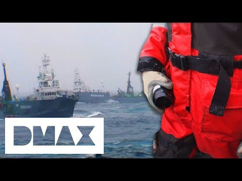 Sea Shepherds Break A Dutch Maritime Rule To Protect Themselves From 4 Japanese Ships | Whale Wars