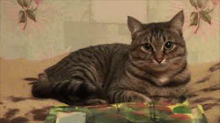 Отдать взрослого кота ПРОБЛЕМА