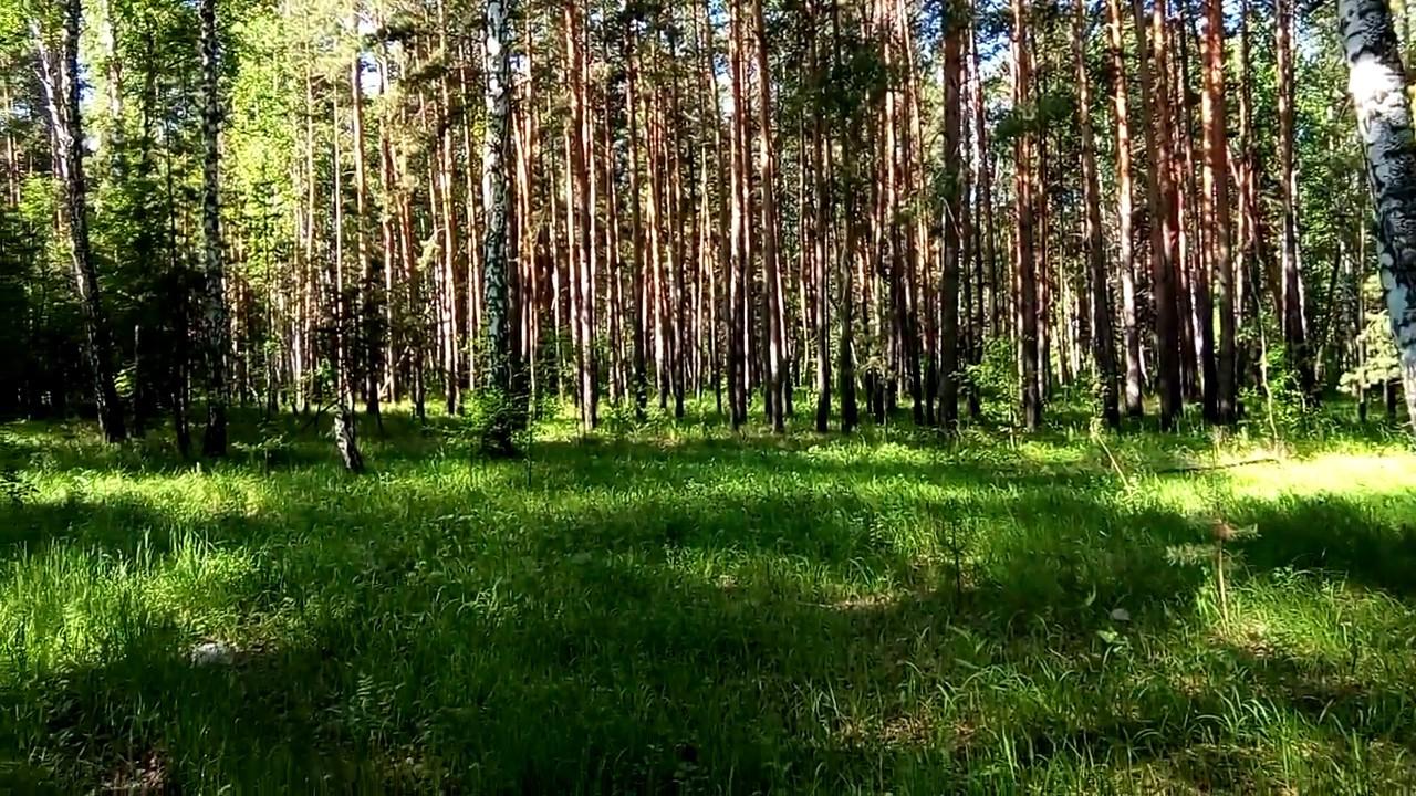 анимации картинки уральский лес танец живота