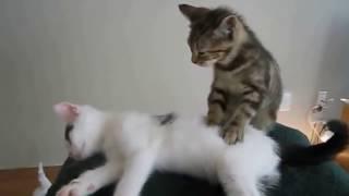 ПРИКОЛЫ С КОТАМИ СМЕШНЫЕ КОТЫ И КОШКИ - Смотреть видео