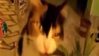 Омега 3 и кошкам нужна!