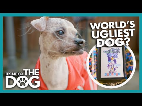 Is This The World's Ugliest Dog? | Britain's Favourite Dogs