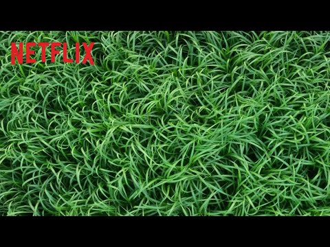 Trailer : In the Tall Grass, une nouvelle adaptation de Stephen King pour Netflix