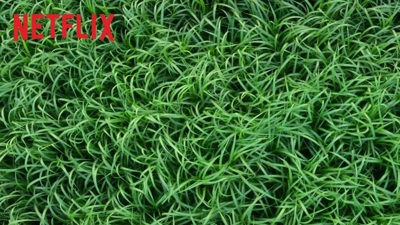 Dans les hautes herbes | Bande-annonce officielle | Netflix