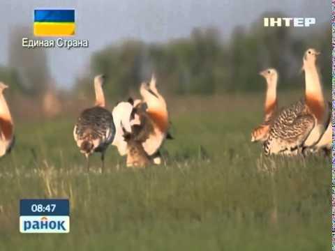 Червона Книга України: Дрохва - Ранок - Інтер