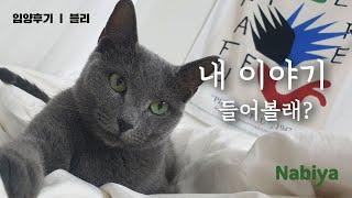 [입양후기] 한겨울 이동장 채 유기되었던 블리의 이야기