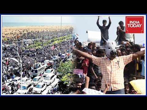 Massive Crowd At Marina Beach Increases As Jallikattu Protests Escalate