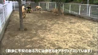 大型犬の情報はこちらから! http://www.masaki-collection.jp/