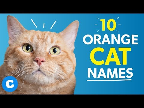 10 Orange Cat Names | Chewy