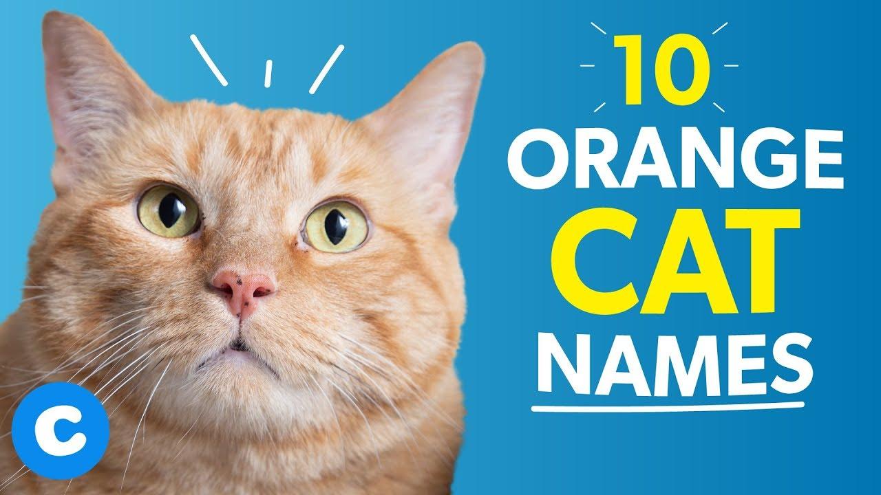 10 Orange Cat Names Chewy Youtube