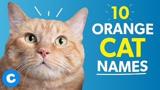 10 Orange Cat Names Chewy Youtube