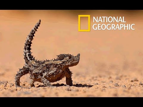 Wild Arabia -