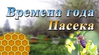 видео Календар пасічника. Вересень