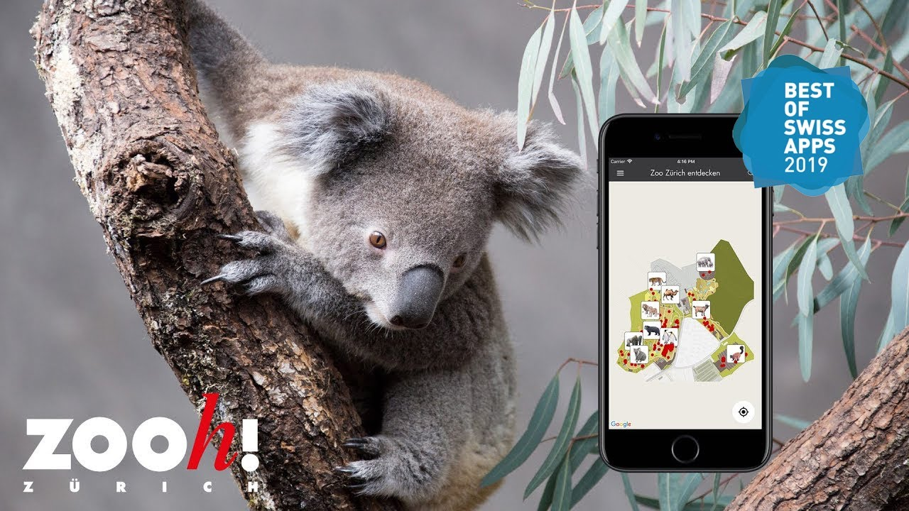 Zoo App Youtube