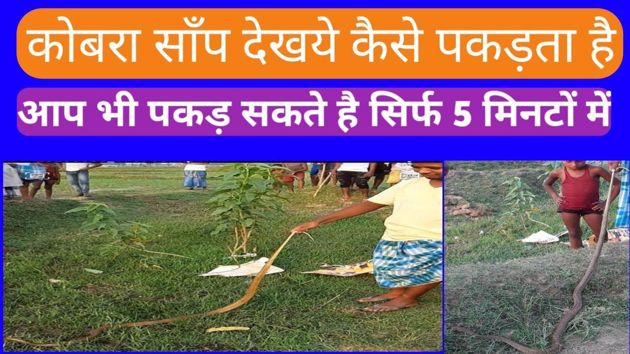 देखिये दुनिया के खतरनाक सांपों मे से एक #कोबरा सांप को कैसे पकड़ा इस बहादुर नौजवान ने😯 #ApnaBasantrai