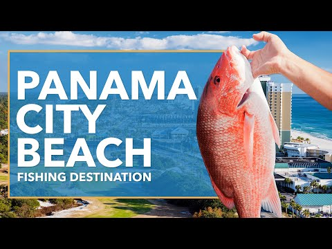 Fishing In Panama City Beach: All You Need To Know | FishingBooker