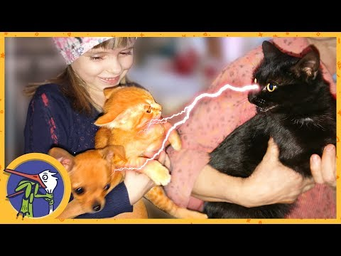 Везем котенка Печеньку на повторную прививку. Познакомили Печеньку и Гаффи с кошкой Китти