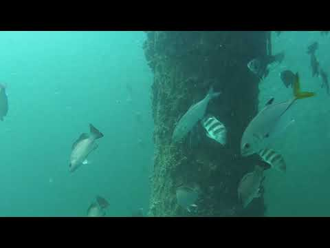 Fishes Around an Oil and Gas Platform in the Hypoxic Zone