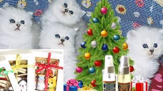 聖誕節影片