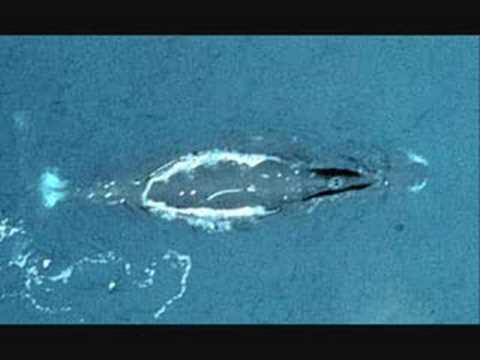 Bowhead Whale Song