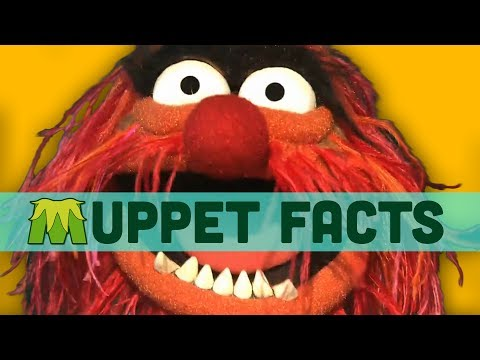 Muppet Facts You Need To Know
