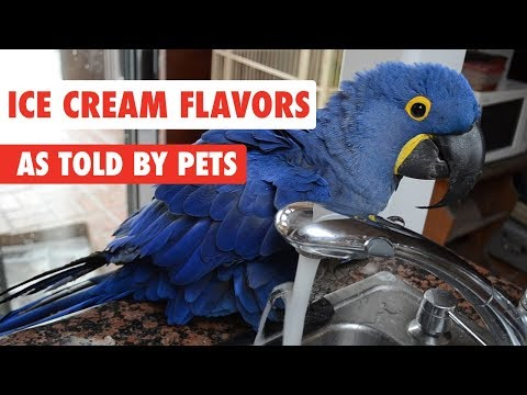 Ice Cream Flavors As Told By Pets
