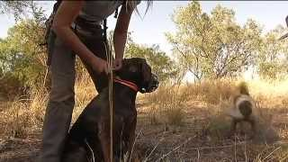 Dogs vs Cats in the Outback
