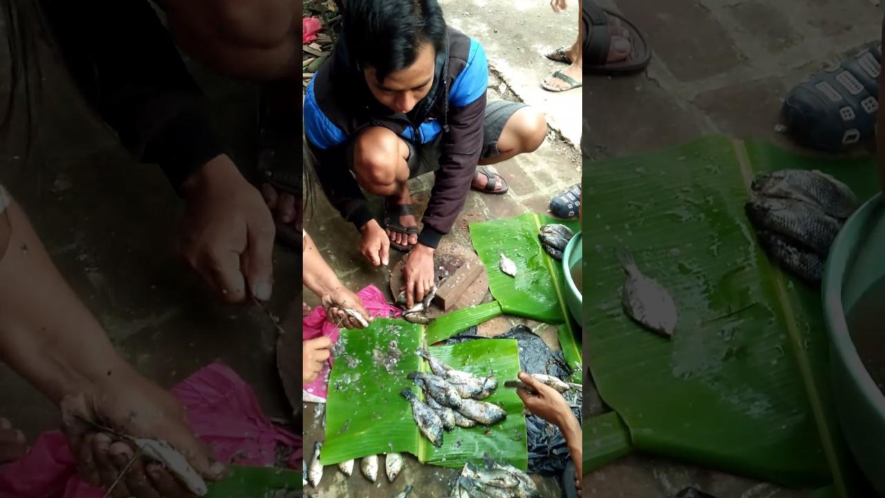 Cara Memotong dan Mengolah Ikan Agar Lezat Dan Menggugah Selera