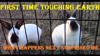 Meat Rabbits First Time Touching Dirt