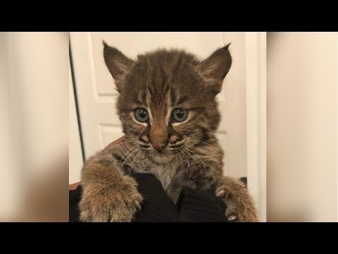 A woman rescued a kitten in Tennessee. But it wasn't a kitten